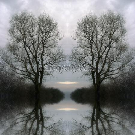 arbol arboles frio niebla tarde ramas