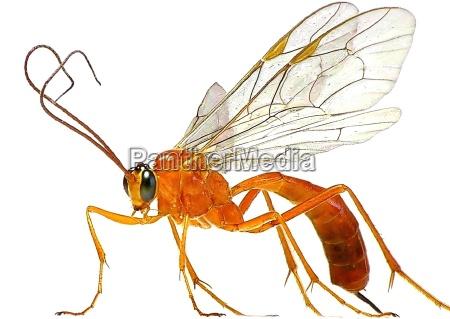 hermoso bueno primer plano opcional insecto