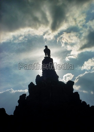 azul monumento piedra pajaro negro aves