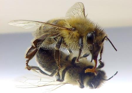 primer plano insecto ojos ala cabello