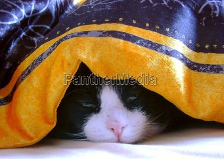 cama techo suenyo cansado cansancio sonyoliento