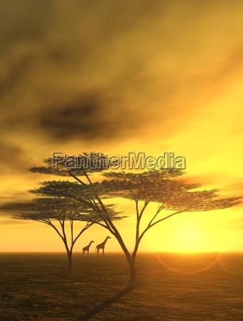tarde en africa