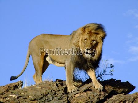 rey de las bestias 3