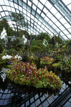 carnivorous plant display inside cloud forest
