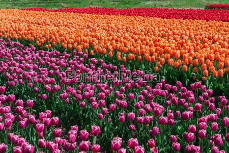 paseo viaje agricola color flor planta